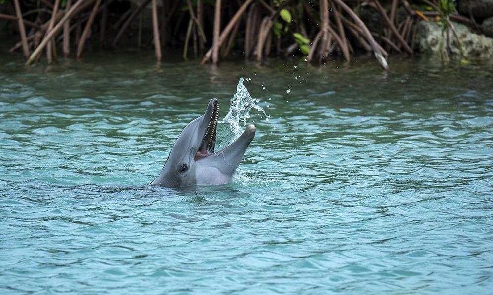Dolphin_tossing_water_marathon2